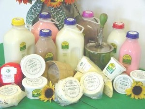 fermented milk and dairy products pdf